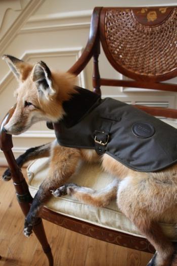 Barbour Wax Dog Coat In Dog Accessories